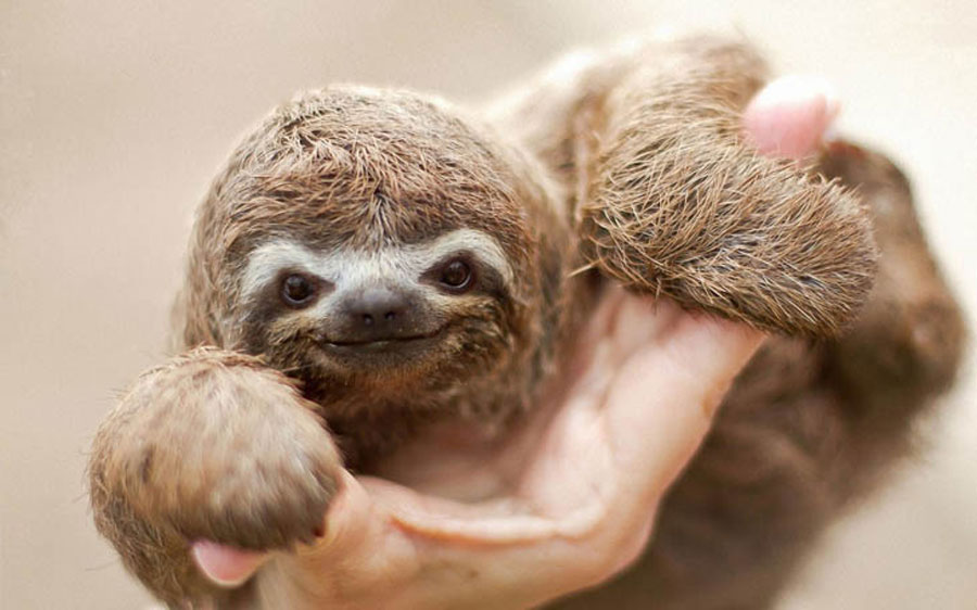 51 cute baby animals are the cutest thing you will see this weekend - Funny sloth pics ...